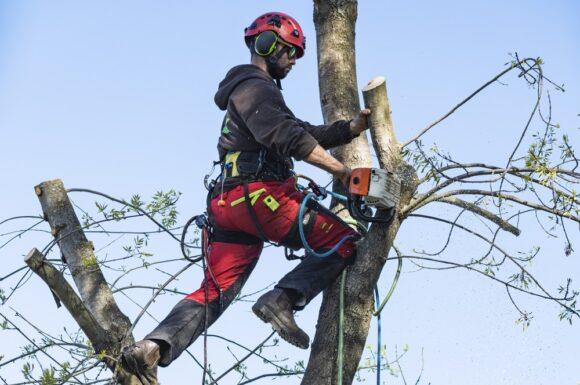 protect-consulting-curs-operator-la-recoltarea-si-toaletarea-arborilor-forestieri